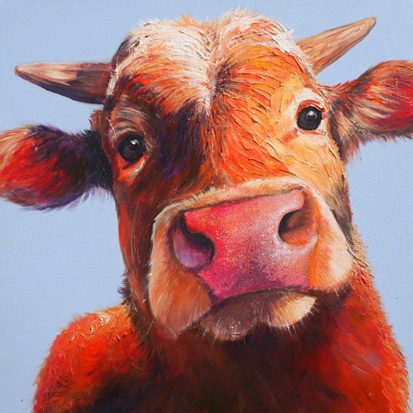 Zubin the Guernsey cow