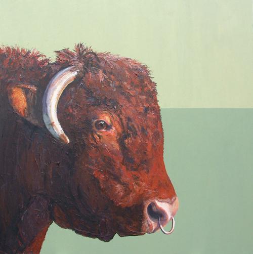 ruby red devon bull