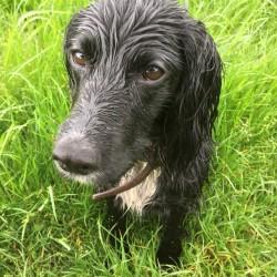 wet Rosie