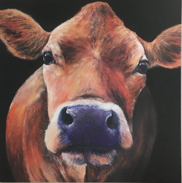 Belinda the Jersey cow